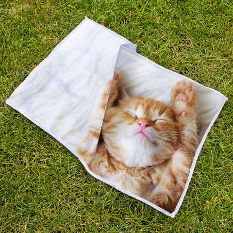 Asciugamano per Cani e Gatti